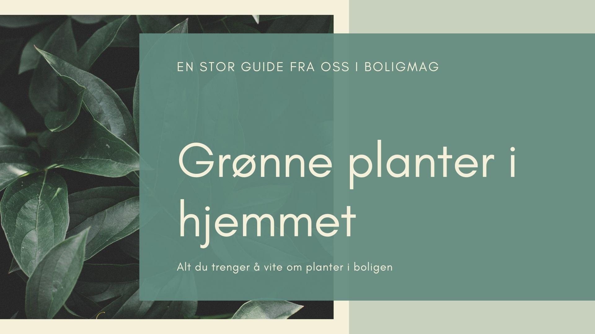 Grønne planter: Slik bør du innrede hjemmet ditt med planter